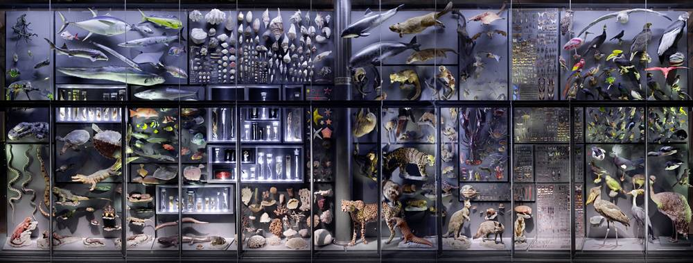 Naturkundemuseum Berlin Shop